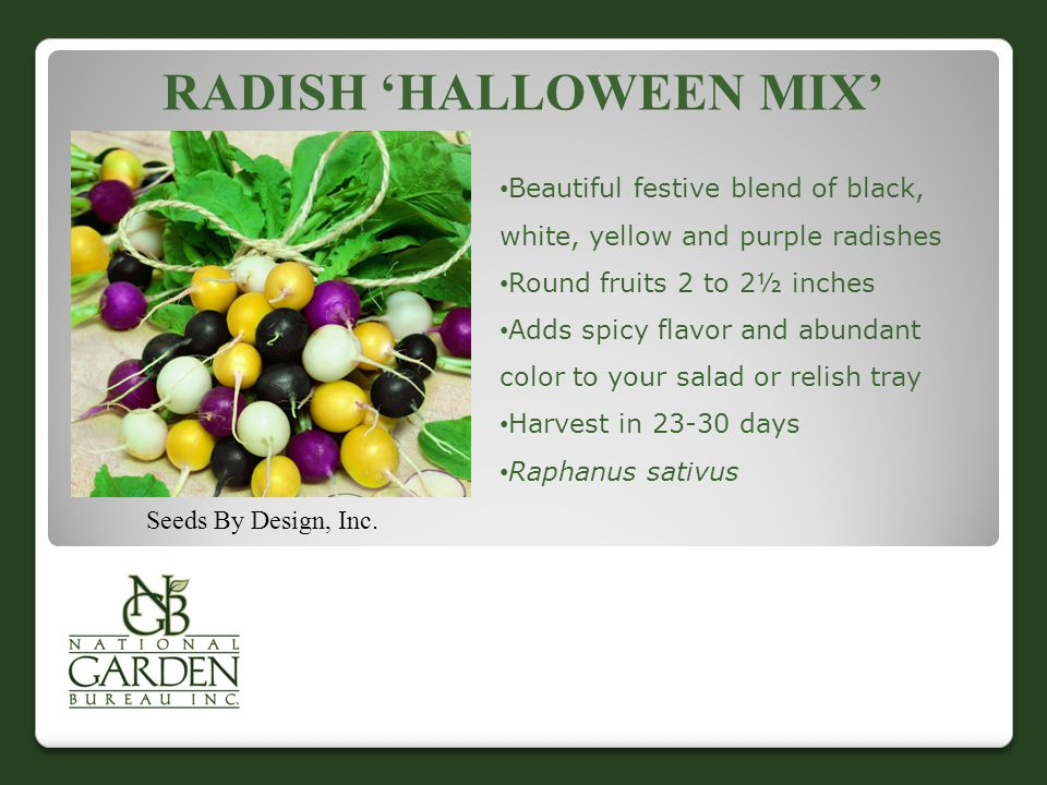 Radish 'Halloween Mix'