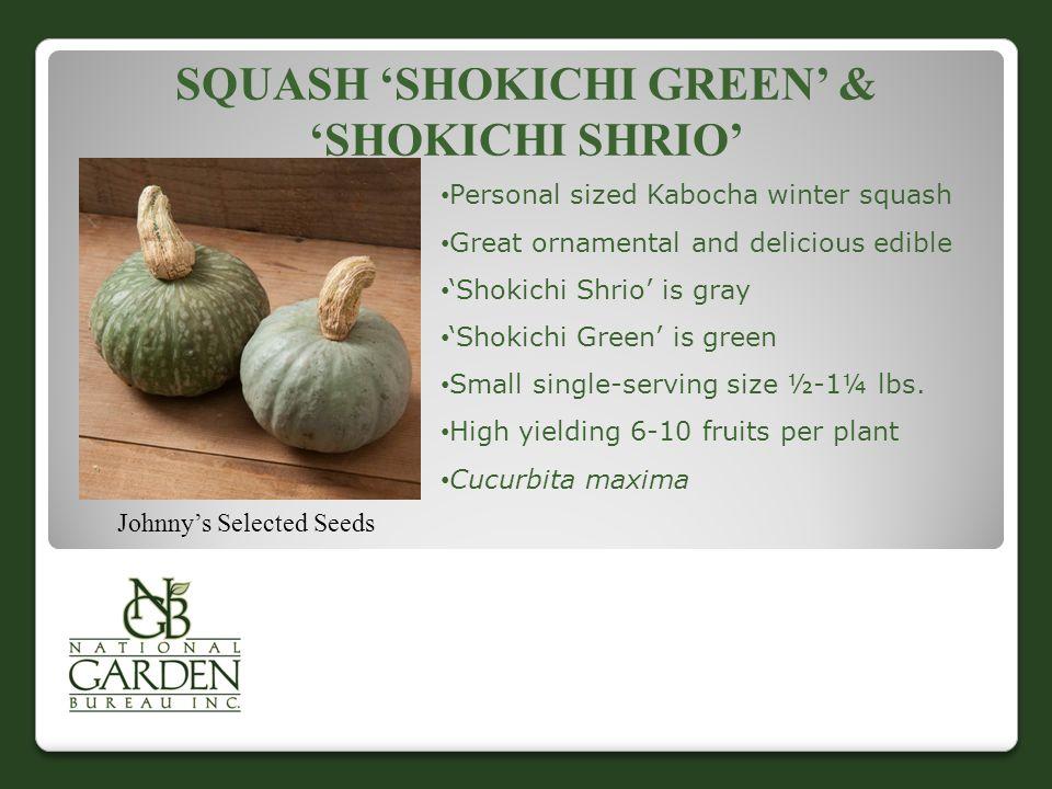 Squash 'Shokichi Green' & 'Shokichi Shrio'