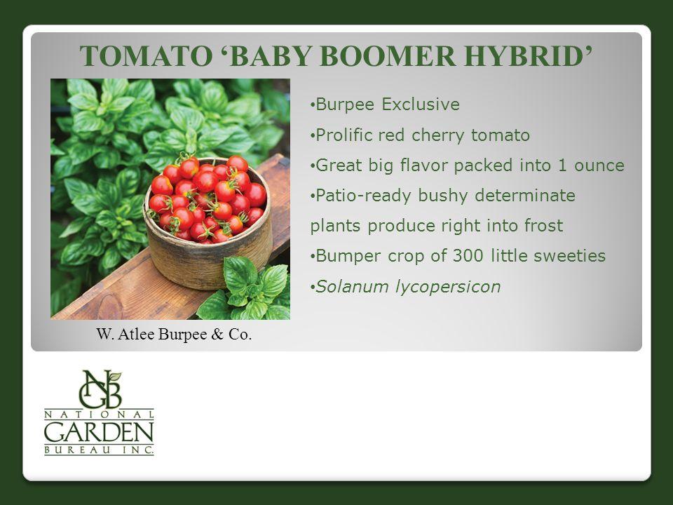Tomato 'Baby Boomer Hybrid'