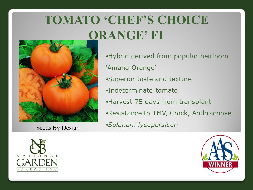 Tomato 'Chef's Choice ORANGE' f1