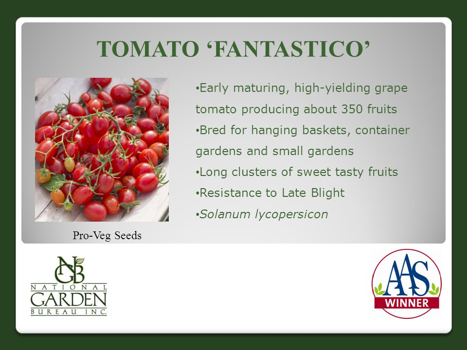 Tomato 'Fantastico' Early maturing, high-yielding grape tomato producing about 350 fruits.