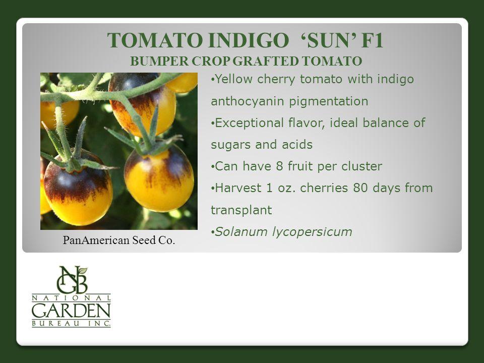 Tomato Indigo 'Sun' F1 Bumper Crop Grafted Tomato
