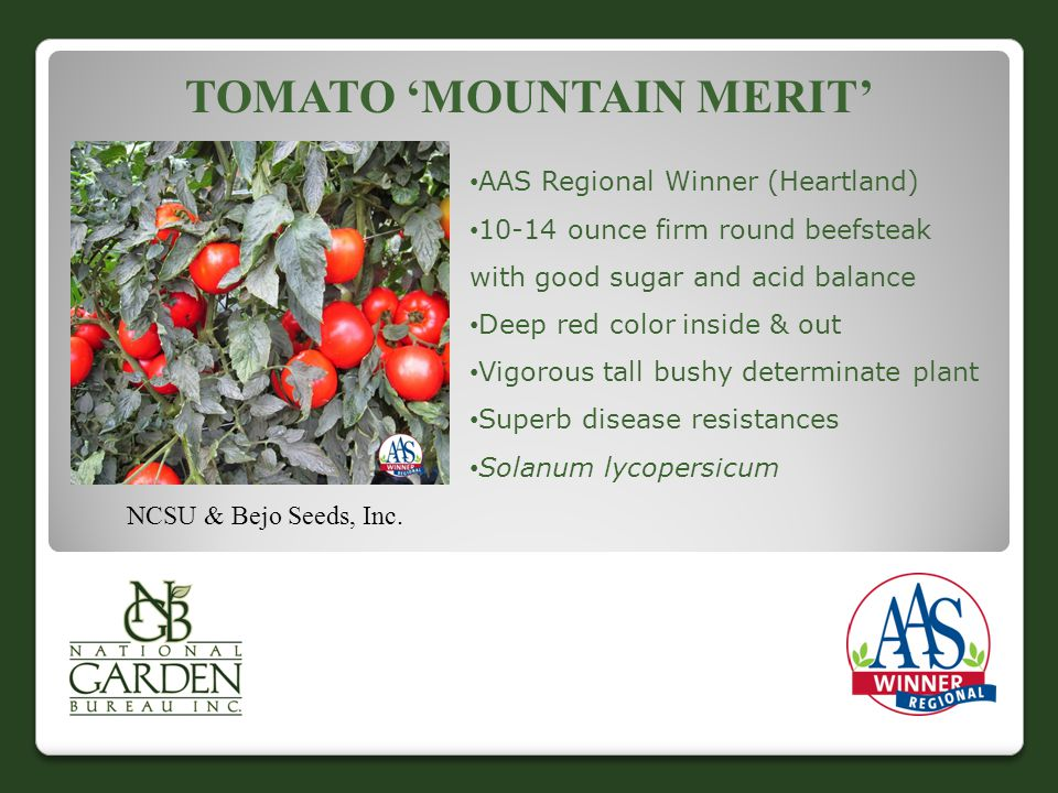 Tomato 'Mountain Merit'