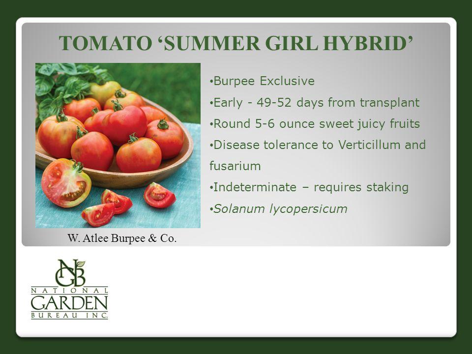Tomato 'Summer Girl Hybrid'