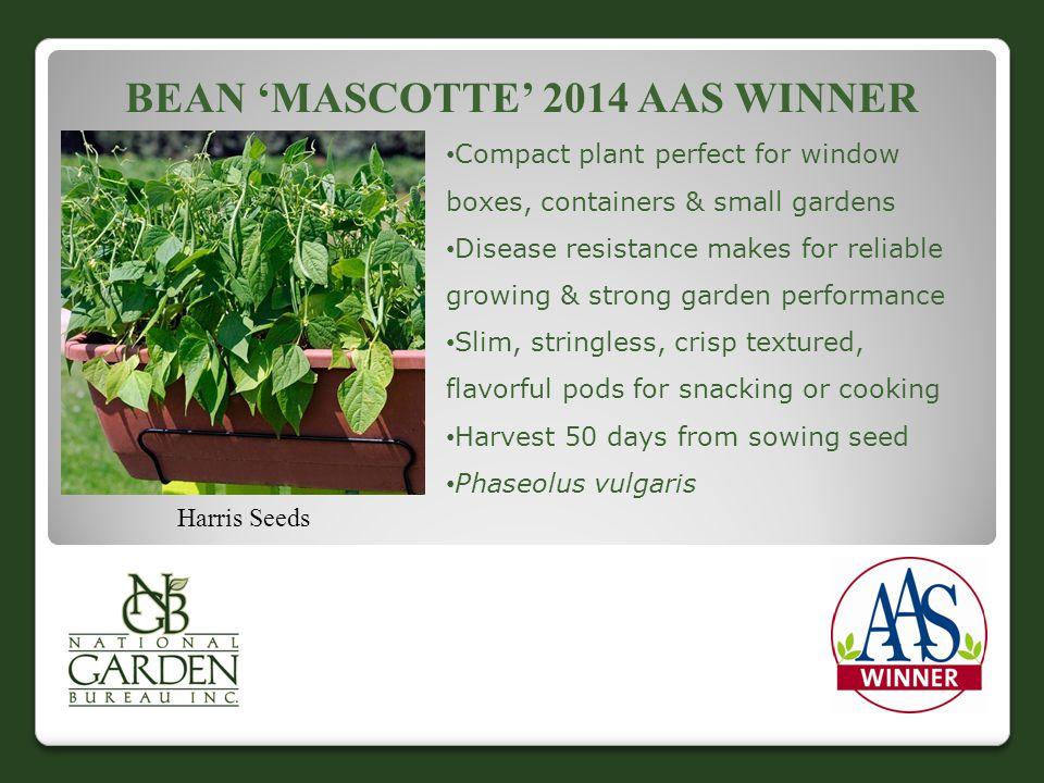 Bean 'Mascotte' 2014 AAS Winner