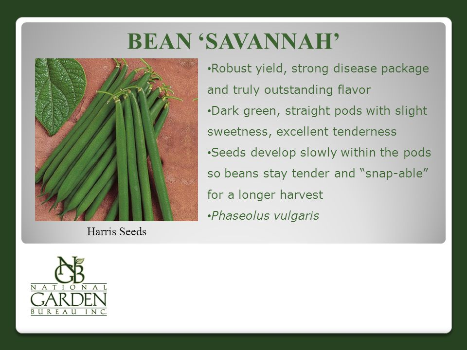 Bean 'Savannah' Robust yield, strong disease package and truly outstanding flavor.
