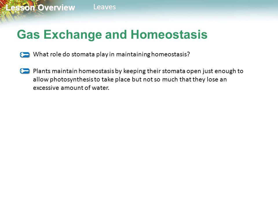 Gas Exchange and Homeostasis