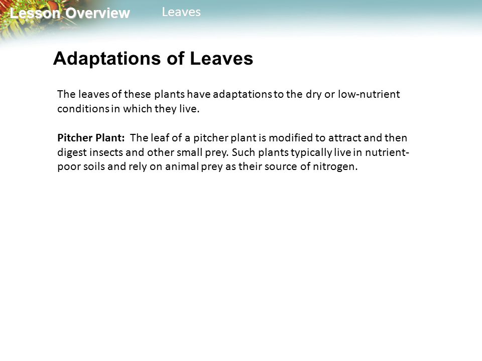 Adaptations of Leaves The leaves of these plants have adaptations to the dry or low-nutrient conditions in which they live.