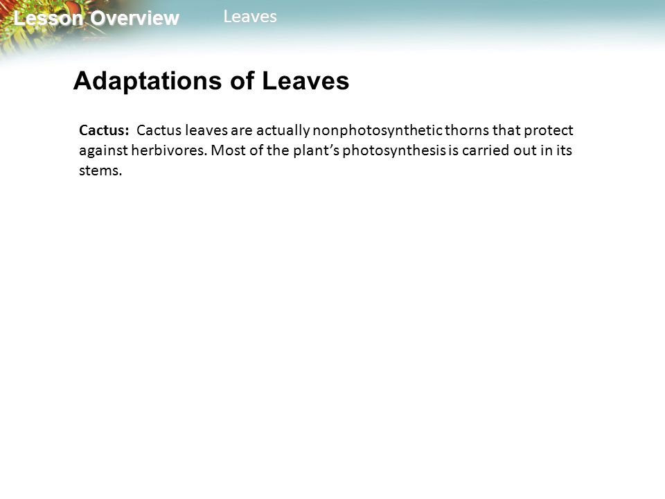 Adaptations of Leaves