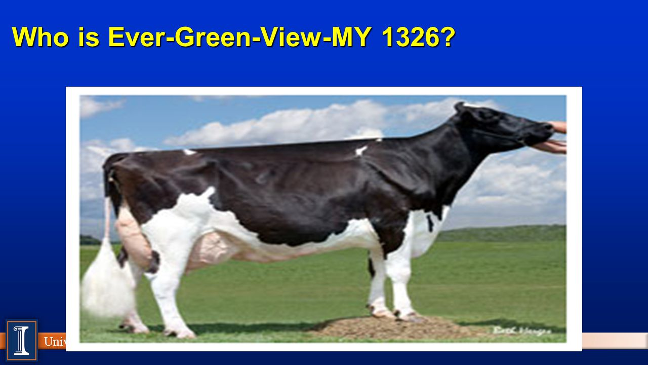 Who is Ever-Green-View-MY 1326