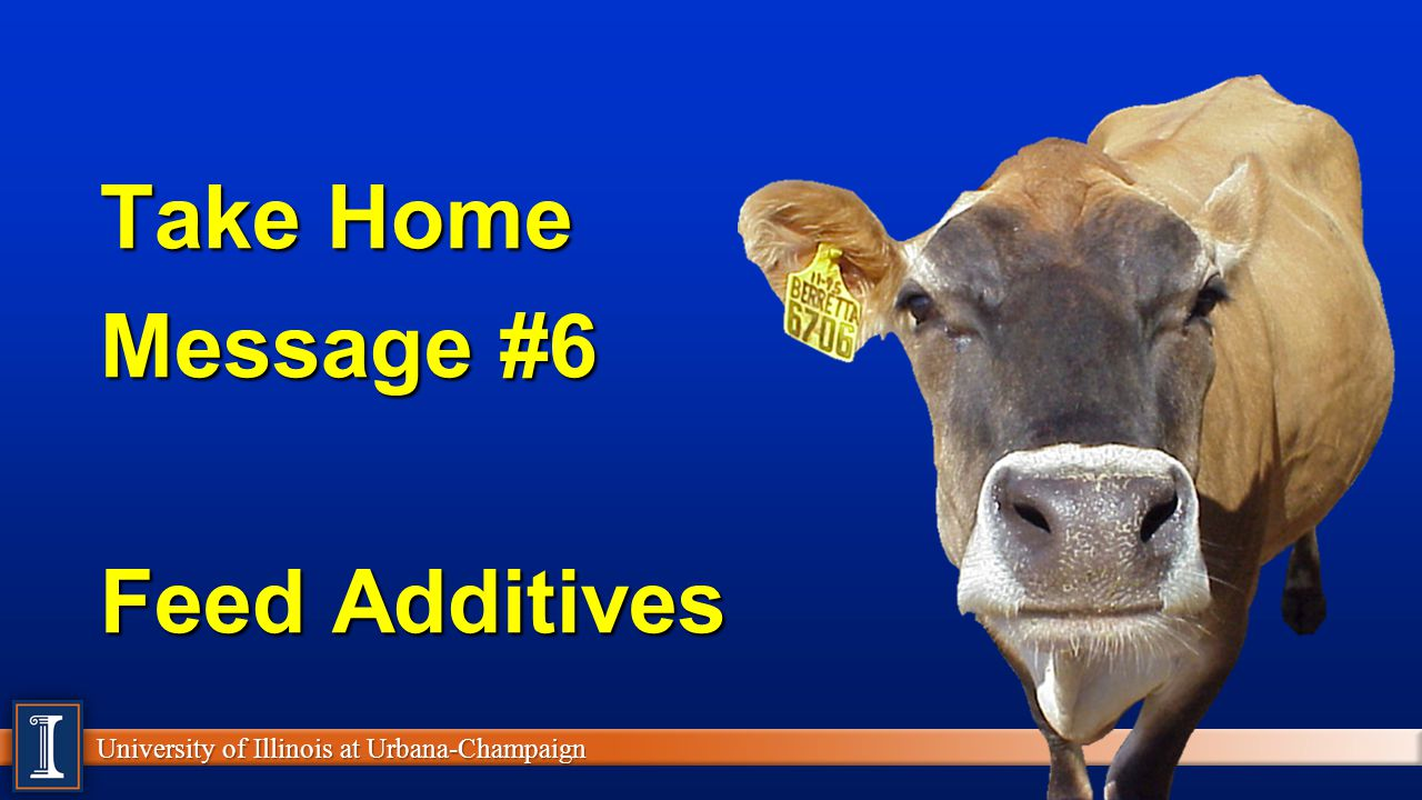 Take Home Message #6 Feed Additives