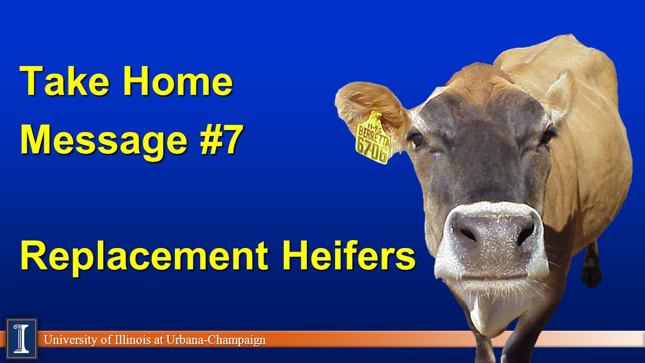 Take Home Message #7 Replacement Heifers