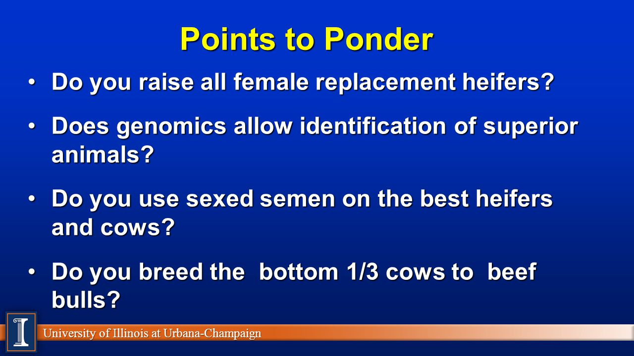 Points to Ponder Do you raise all female replacement heifers