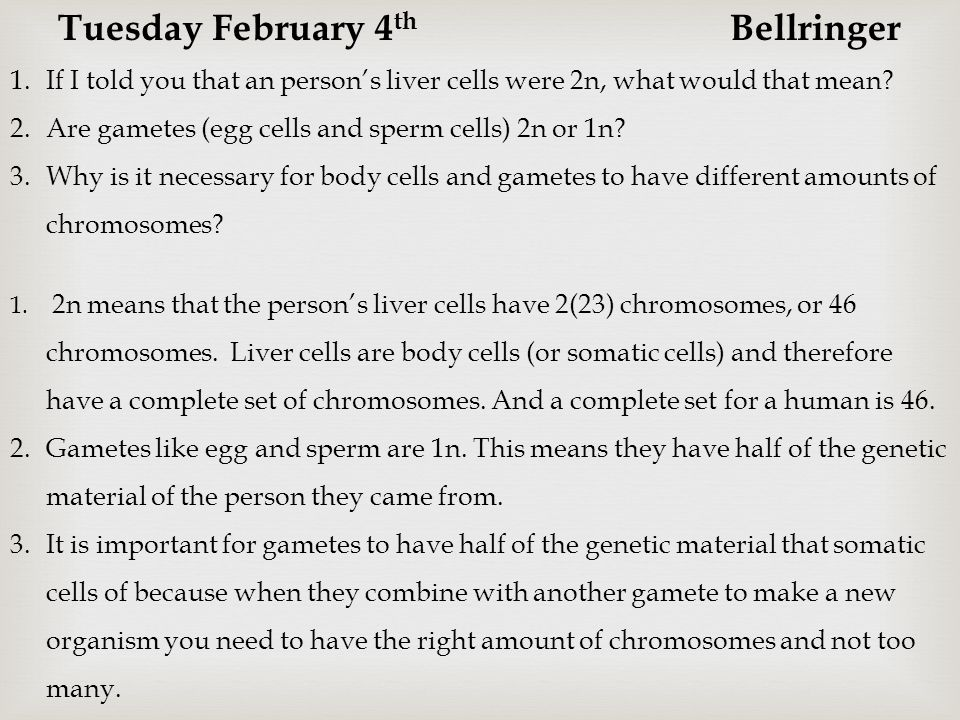 Tuesday February 4th Bellringer