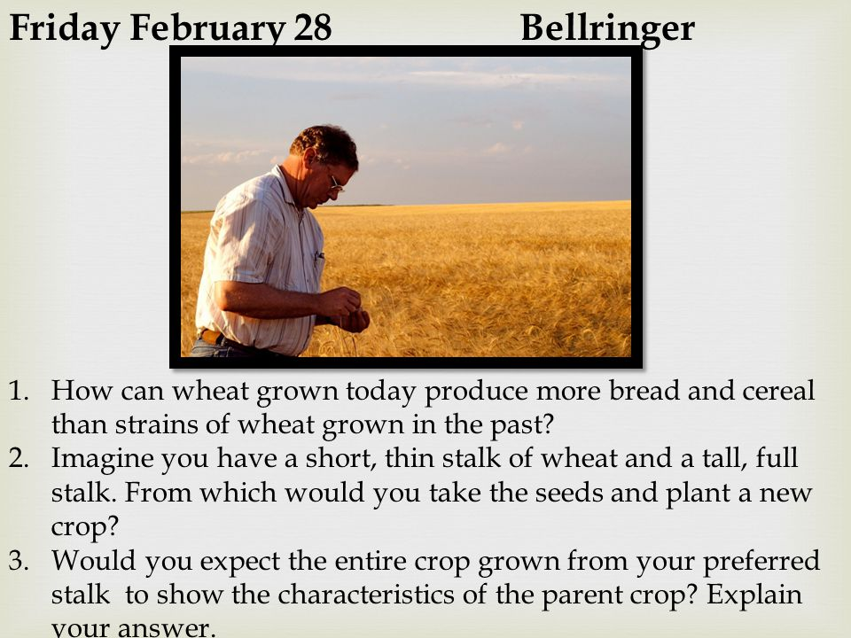 Friday February 28 Bellringer