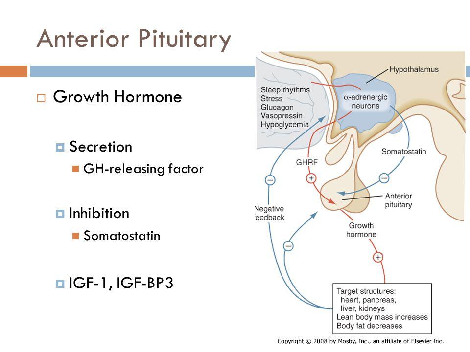 Anterior Pituitary Growth Hormone Secretion Inhibition IGF-1, IGF-BP3