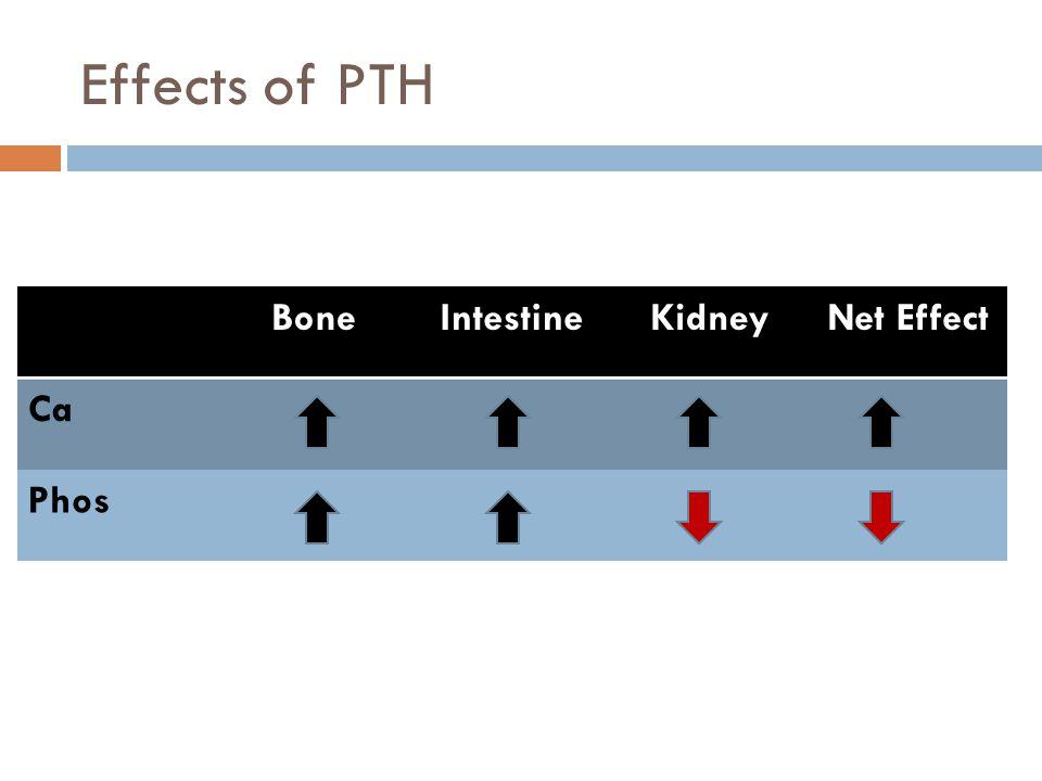 Effects of PTH Bone Intestine Kidney Net Effect Ca Phos