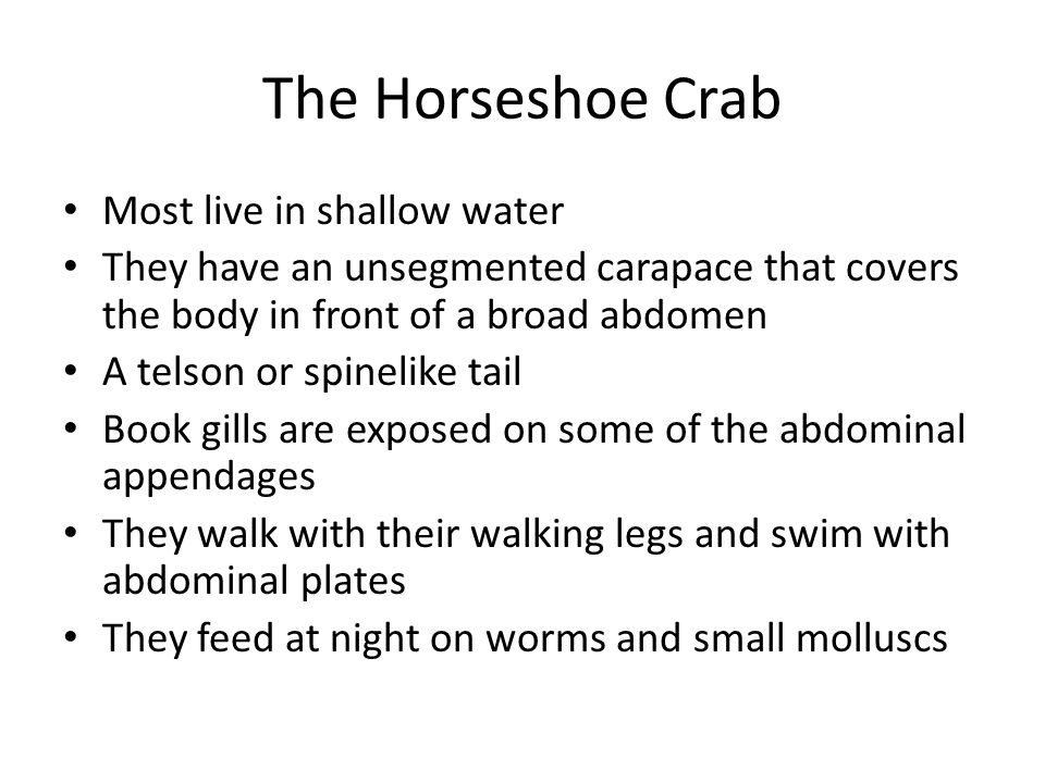 The Horseshoe Crab Most live in shallow water