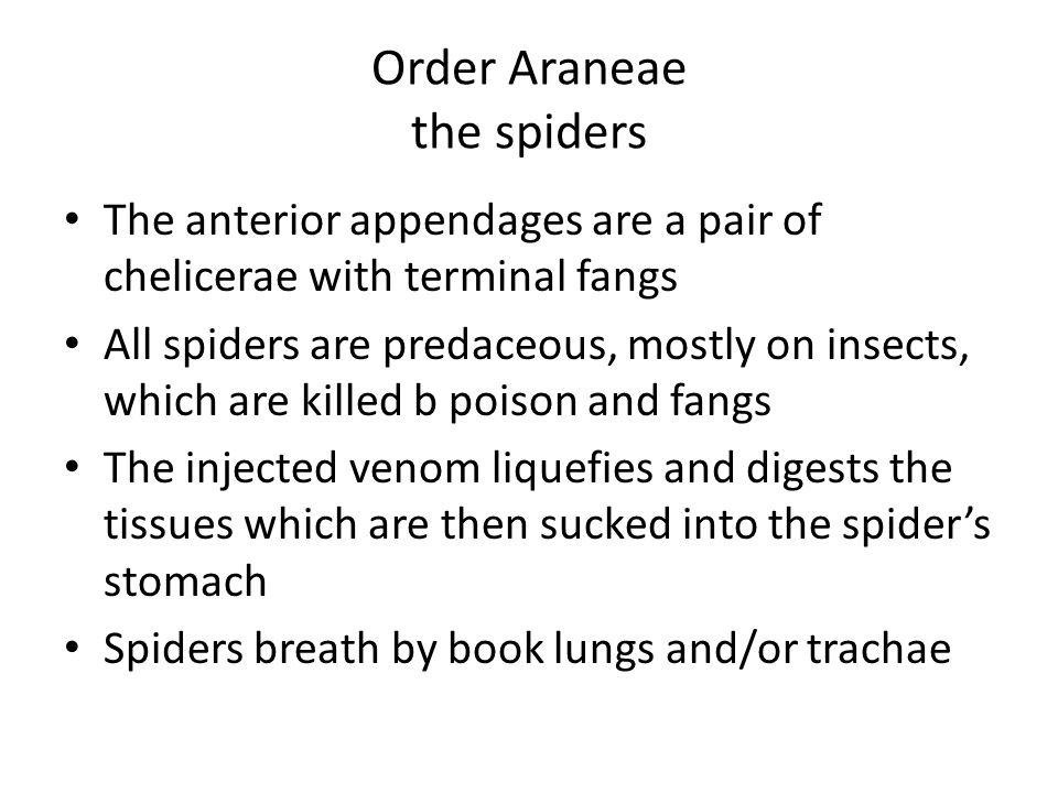 Order Araneae the spiders