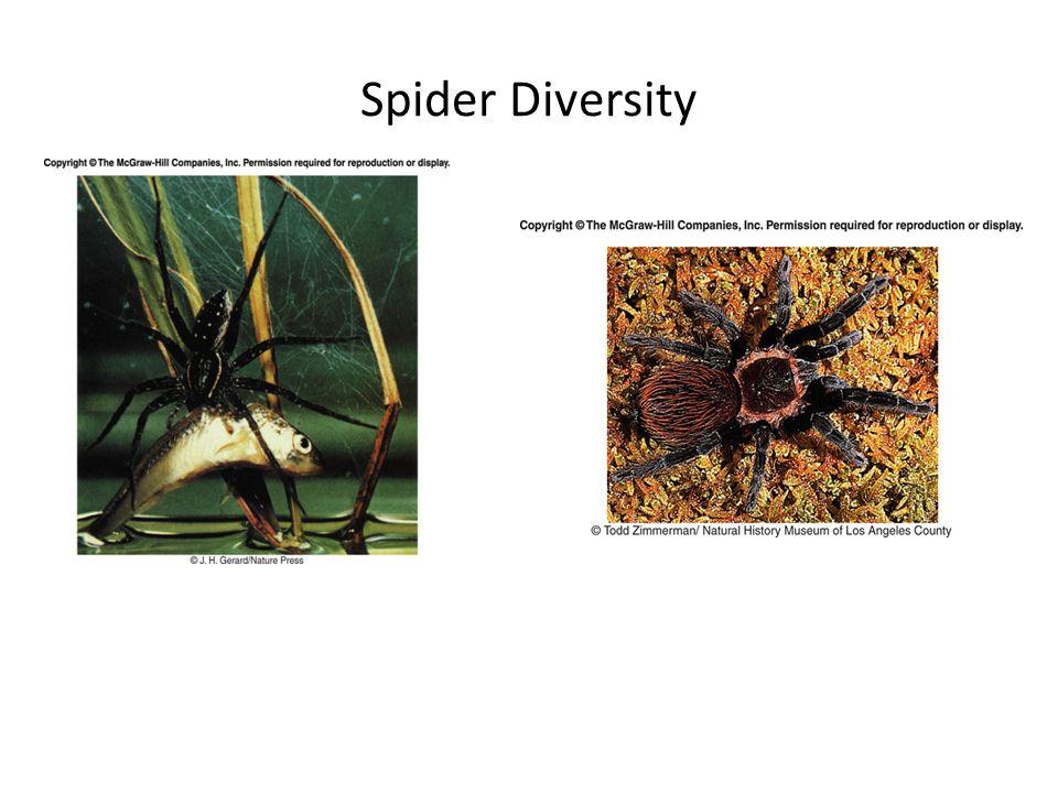 Spider Diversity