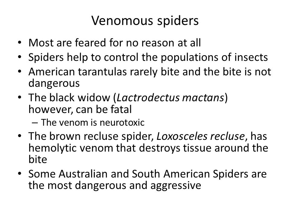 Venomous spiders Most are feared for no reason at all
