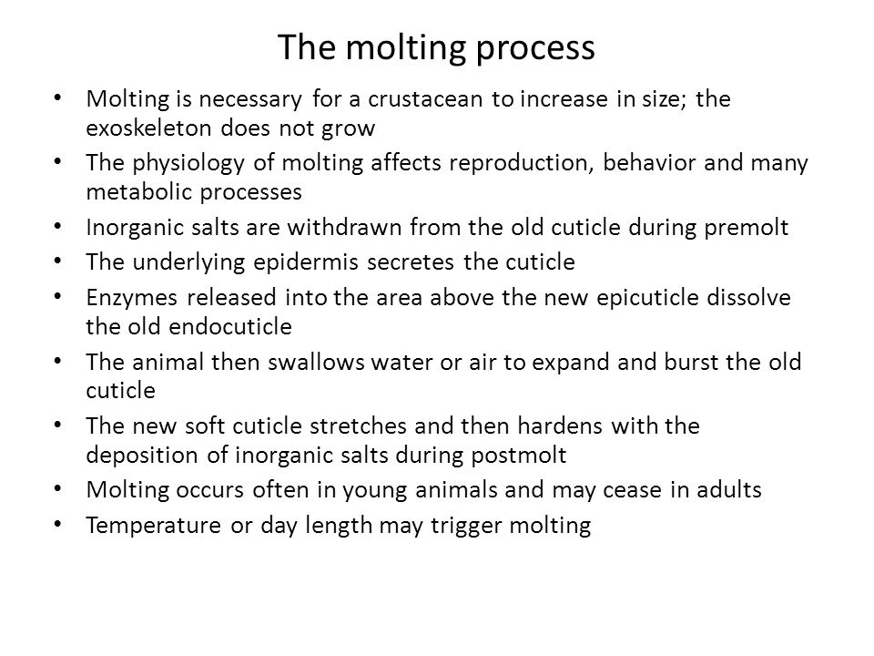 The molting process Molting is necessary for a crustacean to increase in size; the exoskeleton does not grow.