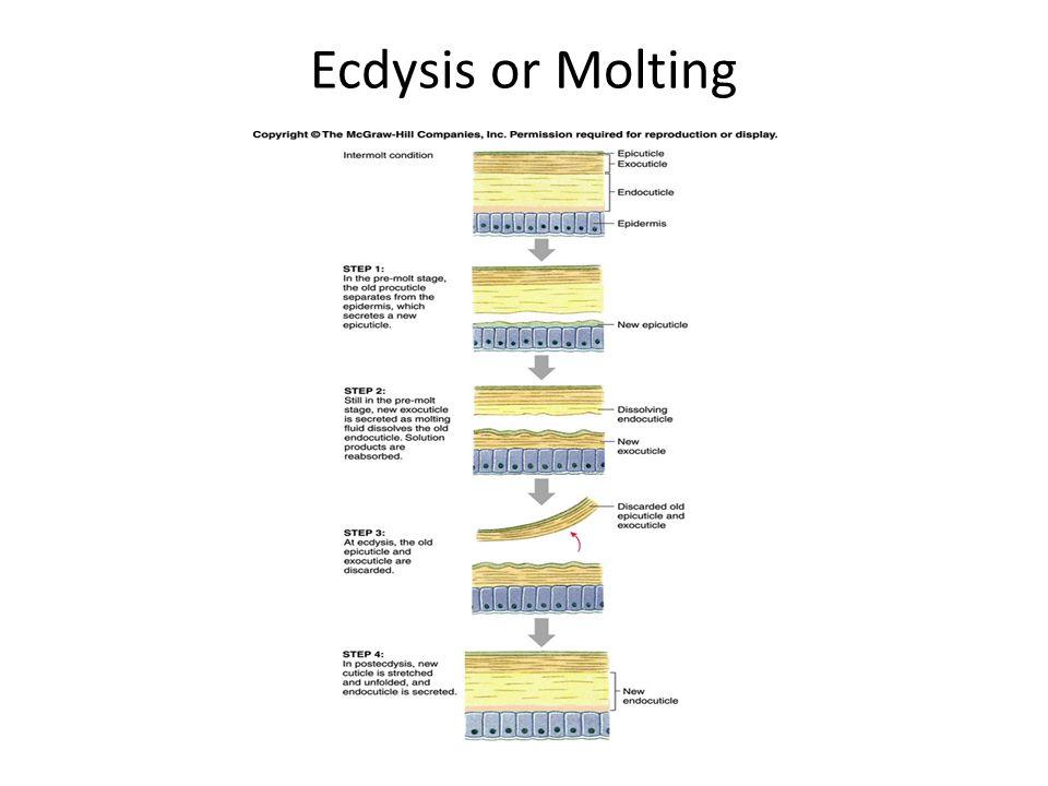 Ecdysis or Molting