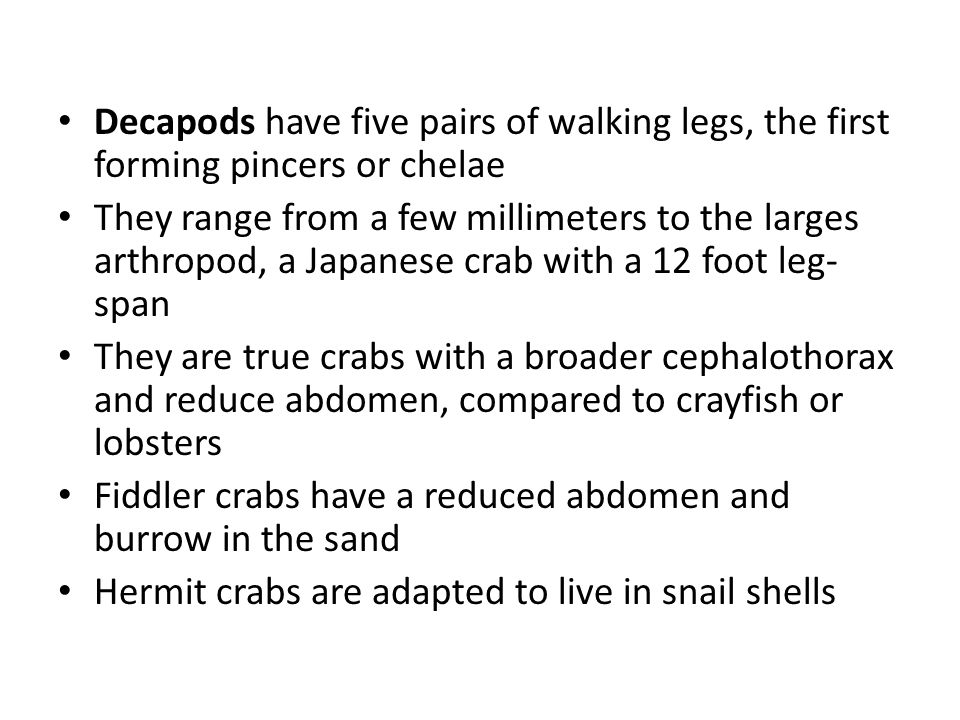 Decapods have five pairs of walking legs, the first forming pincers or chelae