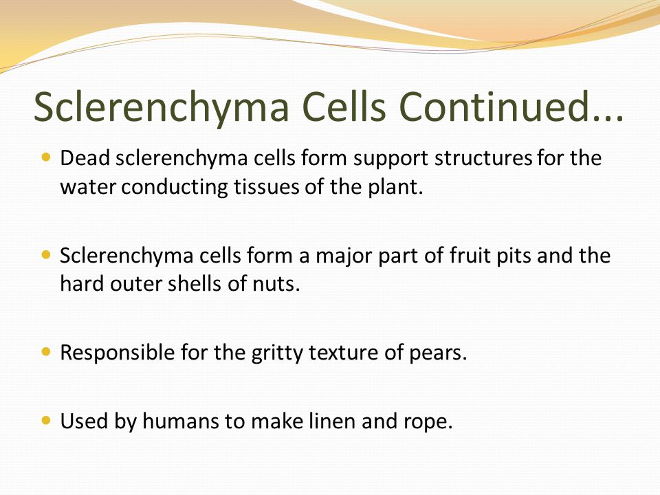 Sclerenchyma Cells Continued...