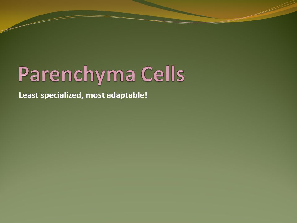 Parenchyma Cells Least specialized, most adaptable!