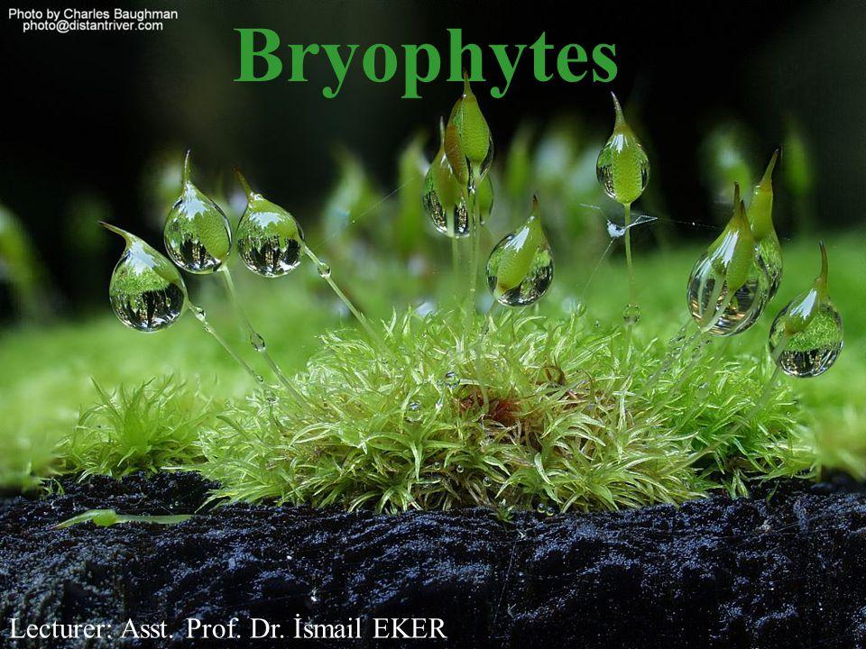 Bryophytes Lecturer: Asst. Prof. Dr. İsmail EKER