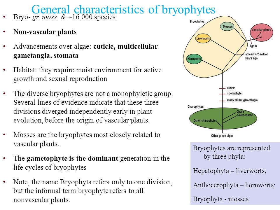 General characteristics of bryophytes