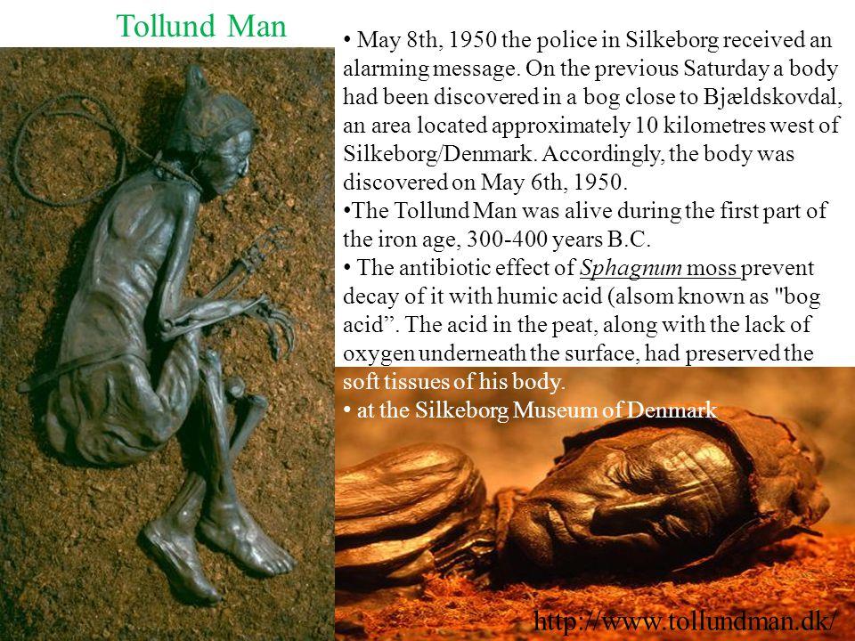 Tollund Man http://www.tollundman.dk/