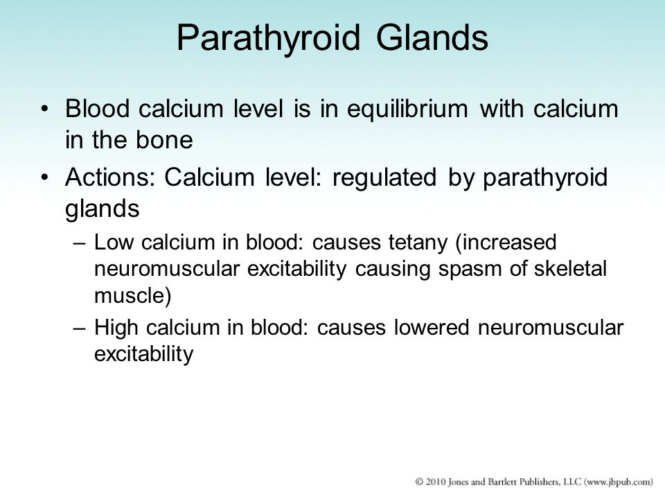 Parathyroid Glands Blood calcium level is in equilibrium with calcium in the bone. Actions: Calcium level: regulated by parathyroid glands.