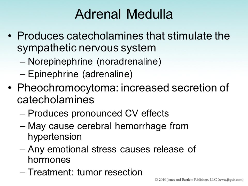 Adrenal Medulla Produces catecholamines that stimulate the sympathetic nervous system. Norepinephrine (noradrenaline)