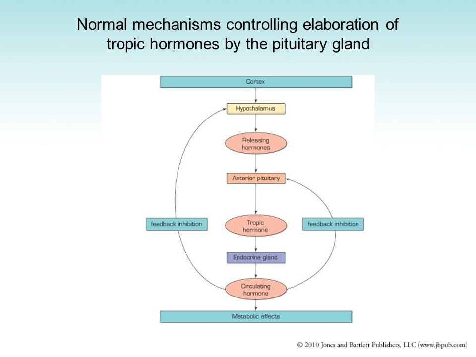 Normal mechanisms controlling elaboration of tropic hormones by the pituitary gland