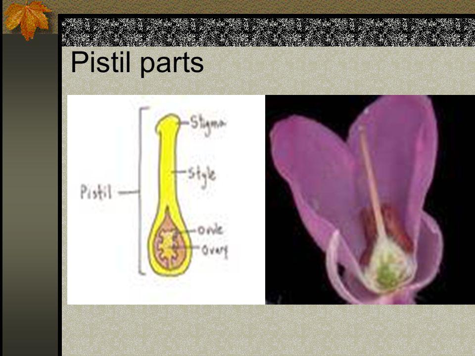 Pistil parts