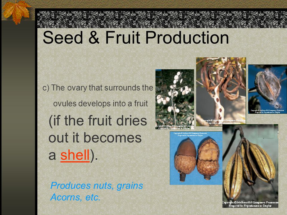 Seed & Fruit Production