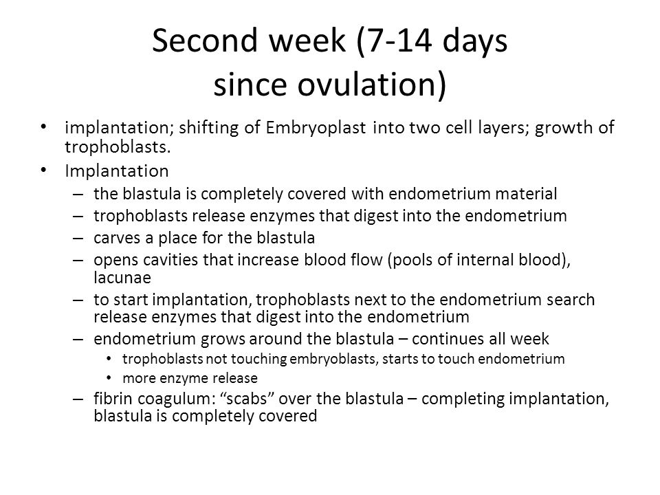 Second week (7-14 days since ovulation)