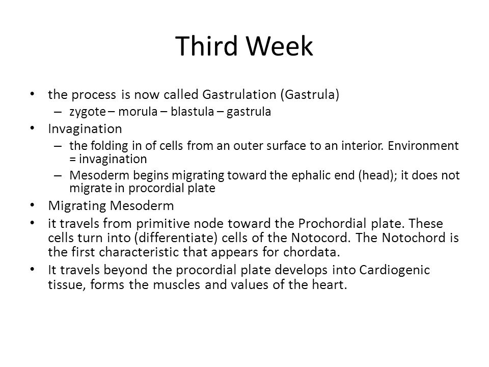 Third Week the process is now called Gastrulation (Gastrula)