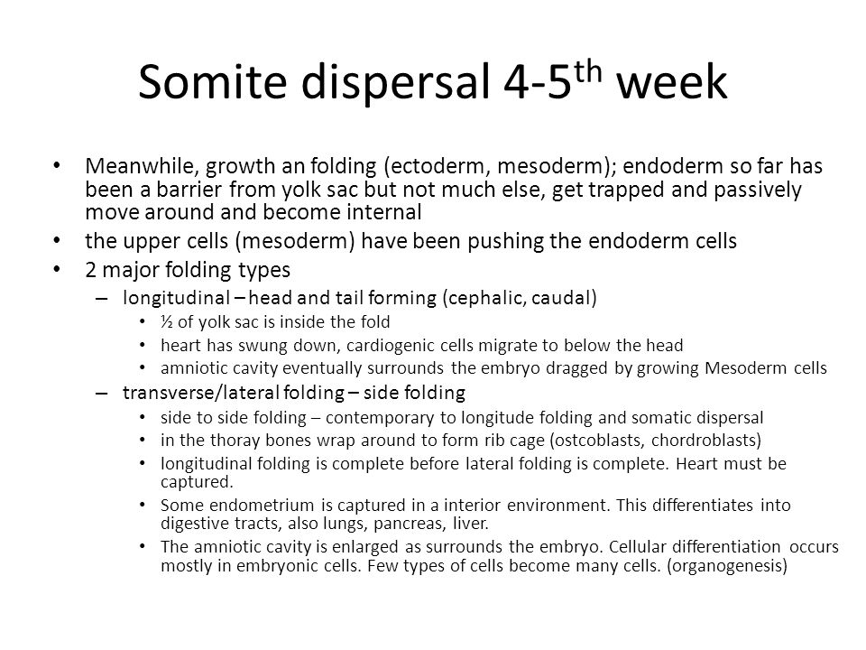 Somite dispersal 4-5th week
