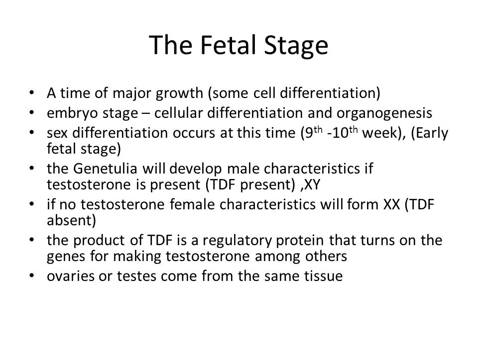 The Fetal Stage A time of major growth (some cell differentiation)