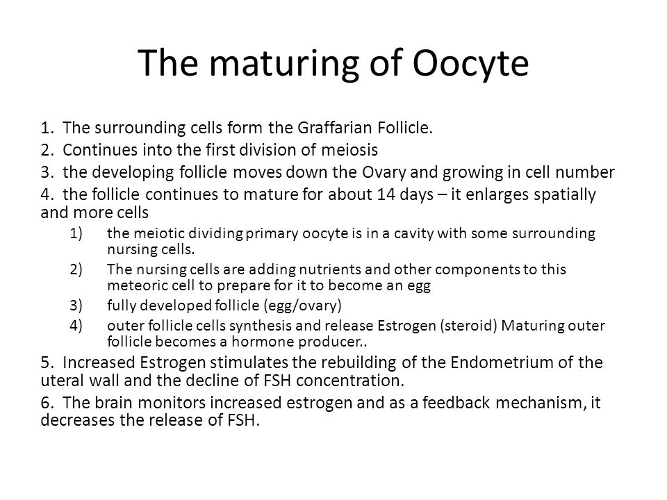 The maturing of Oocyte 1. The surrounding cells form the Graffarian Follicle. 2. Continues into the first division of meiosis.