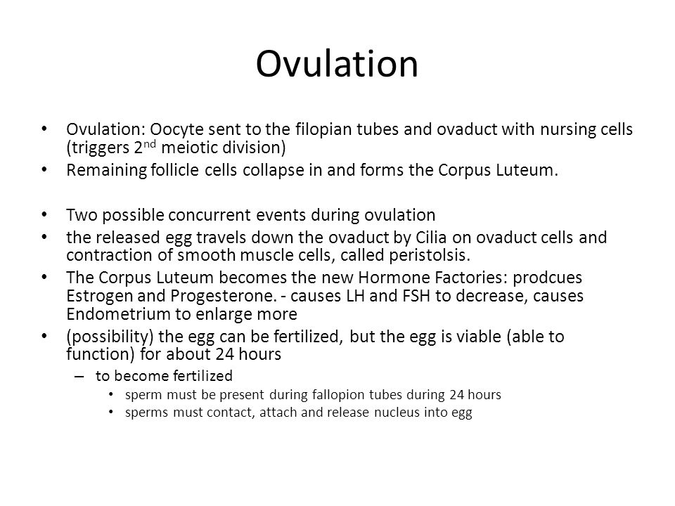 Ovulation Ovulation: Oocyte sent to the filopian tubes and ovaduct with nursing cells (triggers 2nd meiotic division)