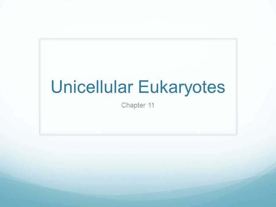 Unicellular Eukaryotes