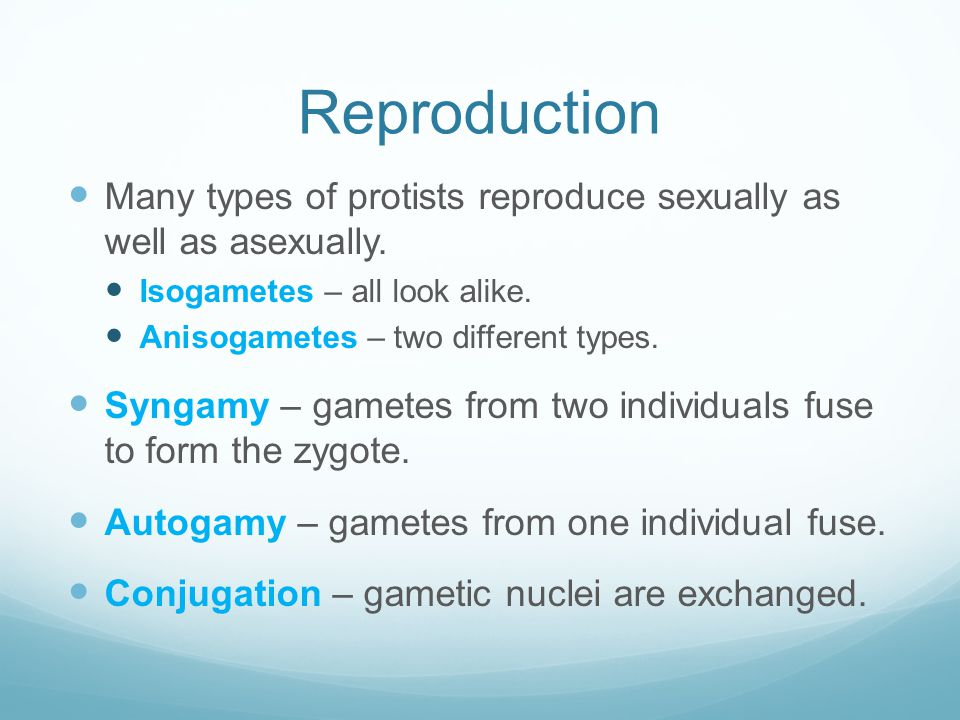Reproduction Many types of protists reproduce sexually as well as asexually. Isogametes – all look alike.