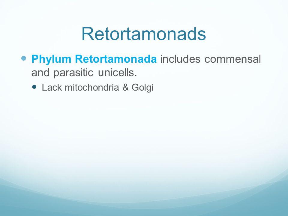 Retortamonads Phylum Retortamonada includes commensal and parasitic unicells.