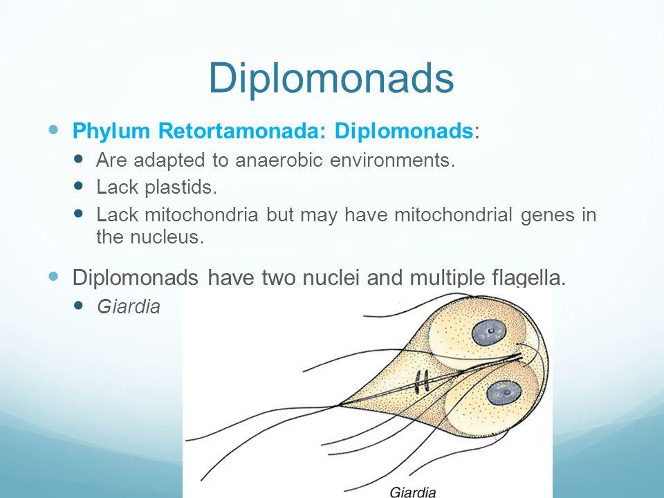 Diplomonads Phylum Retortamonada: Diplomonads: