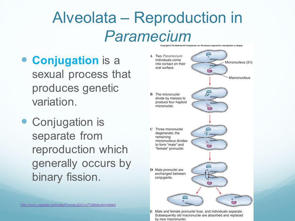 Alveolata – Reproduction in Paramecium