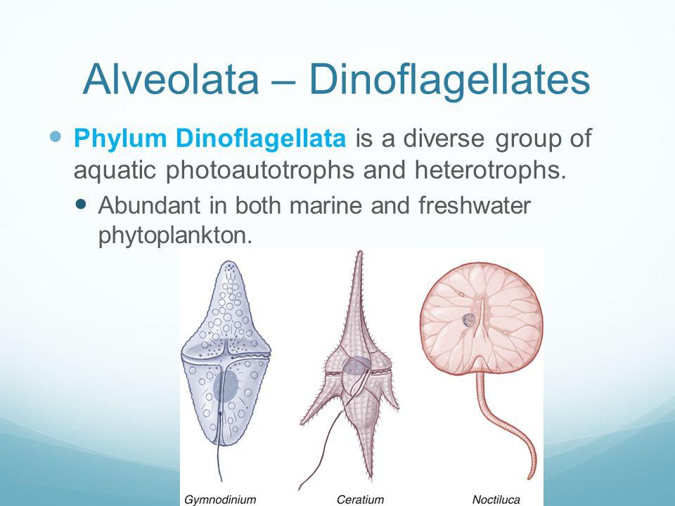 Alveolata – Dinoflagellates
